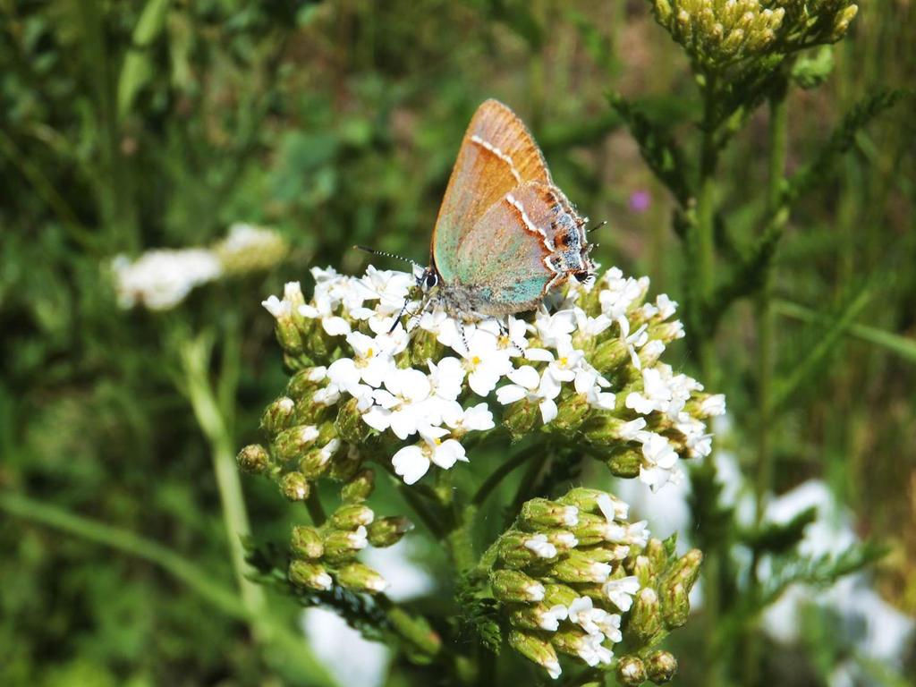 Butterfly 2 by XxSilverOwl13xX