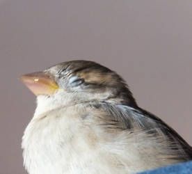 One Relaxed Birdie