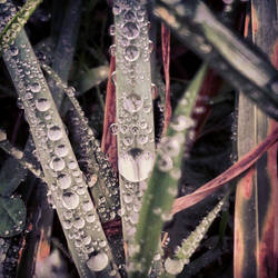 Visions on a Wet Morning by Manigoldo83