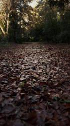 Leaves' Carpet by Manigoldo83