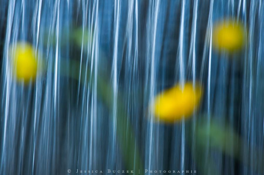 A fleur d'eau... by JessicaBuczek