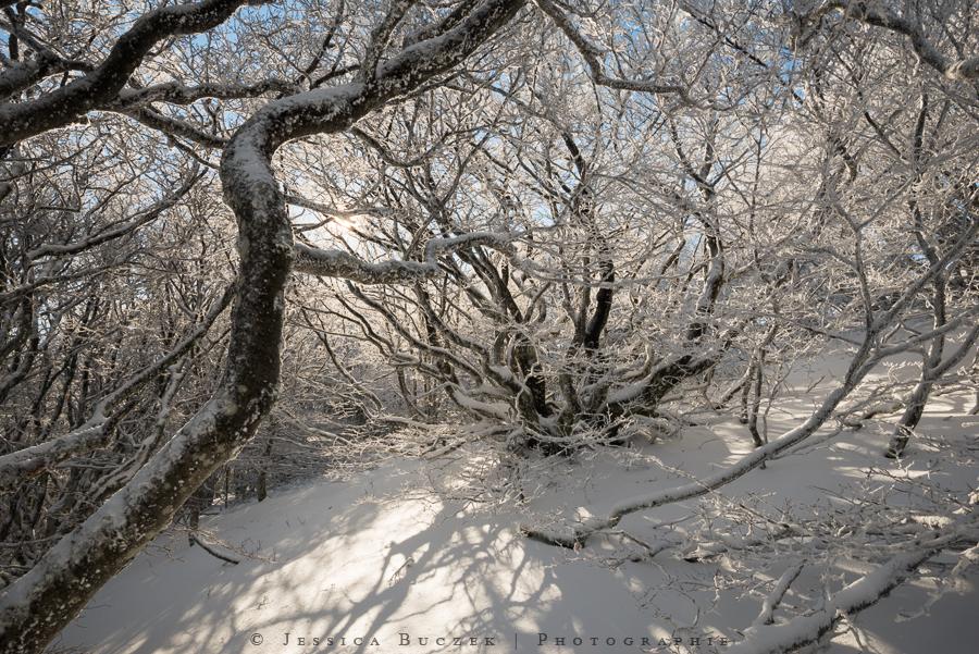 First snow by JessicaBuczek