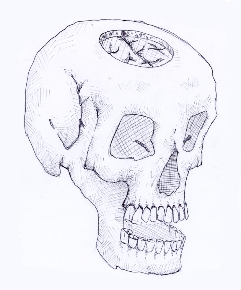 Brain in skull by egeres