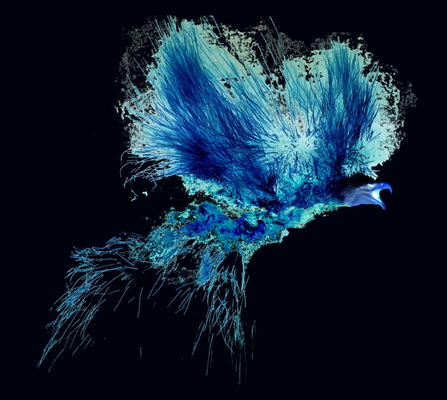 Flaming Eagle By Egeres On DeviantArt