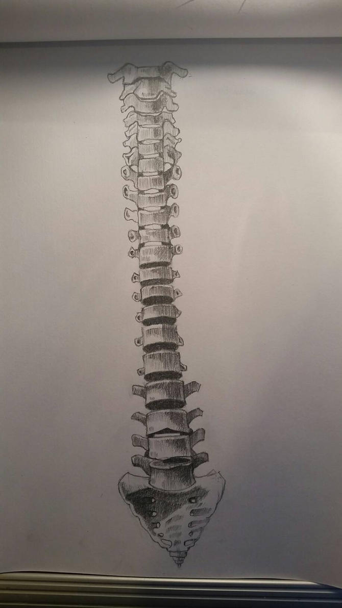 human spine drawing by desenez88