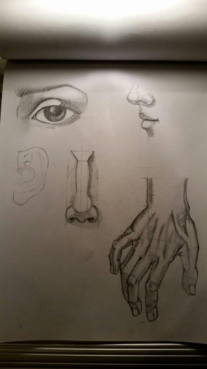 anatomy by desenez88