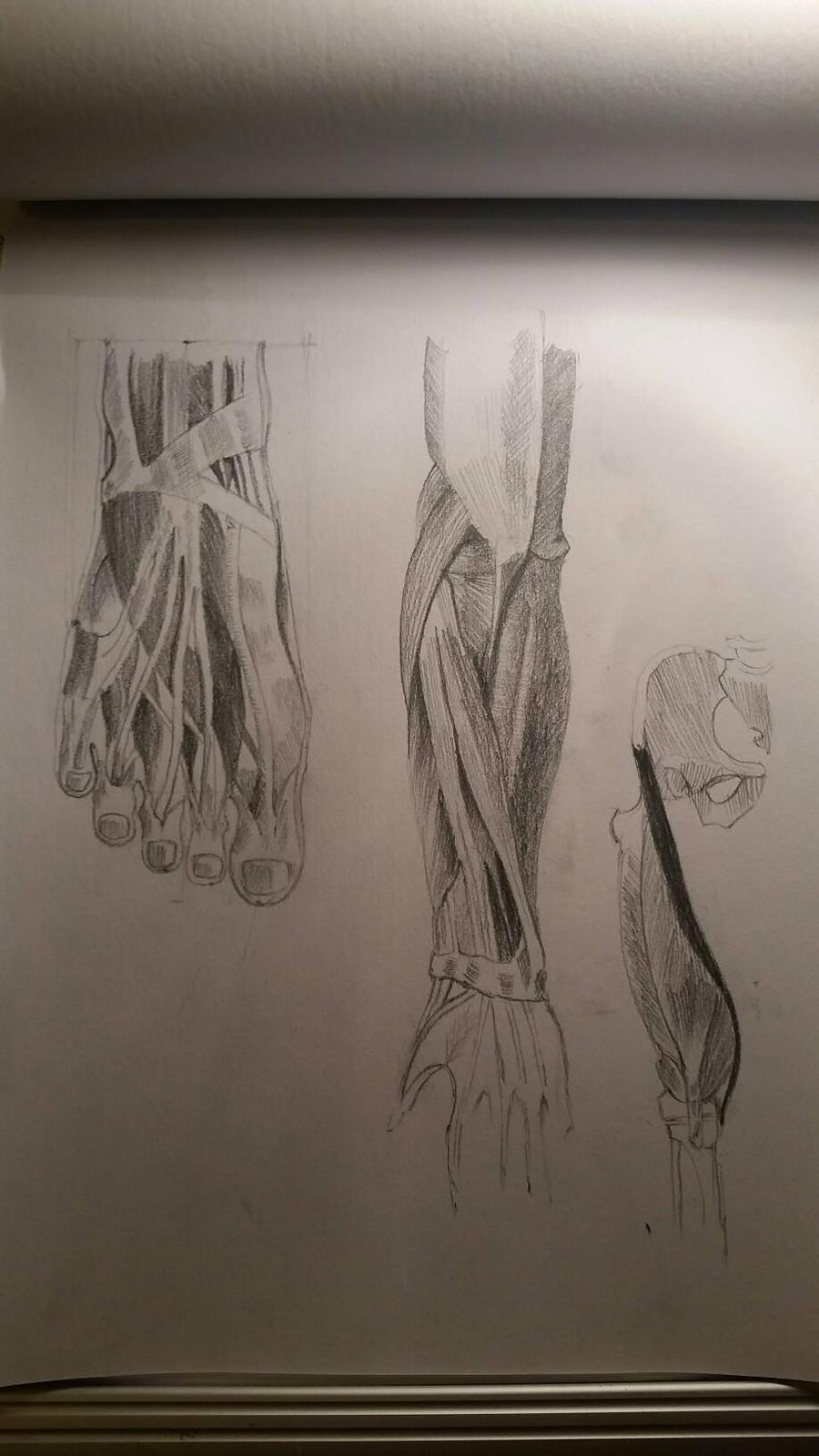 arm foot  by desenez88