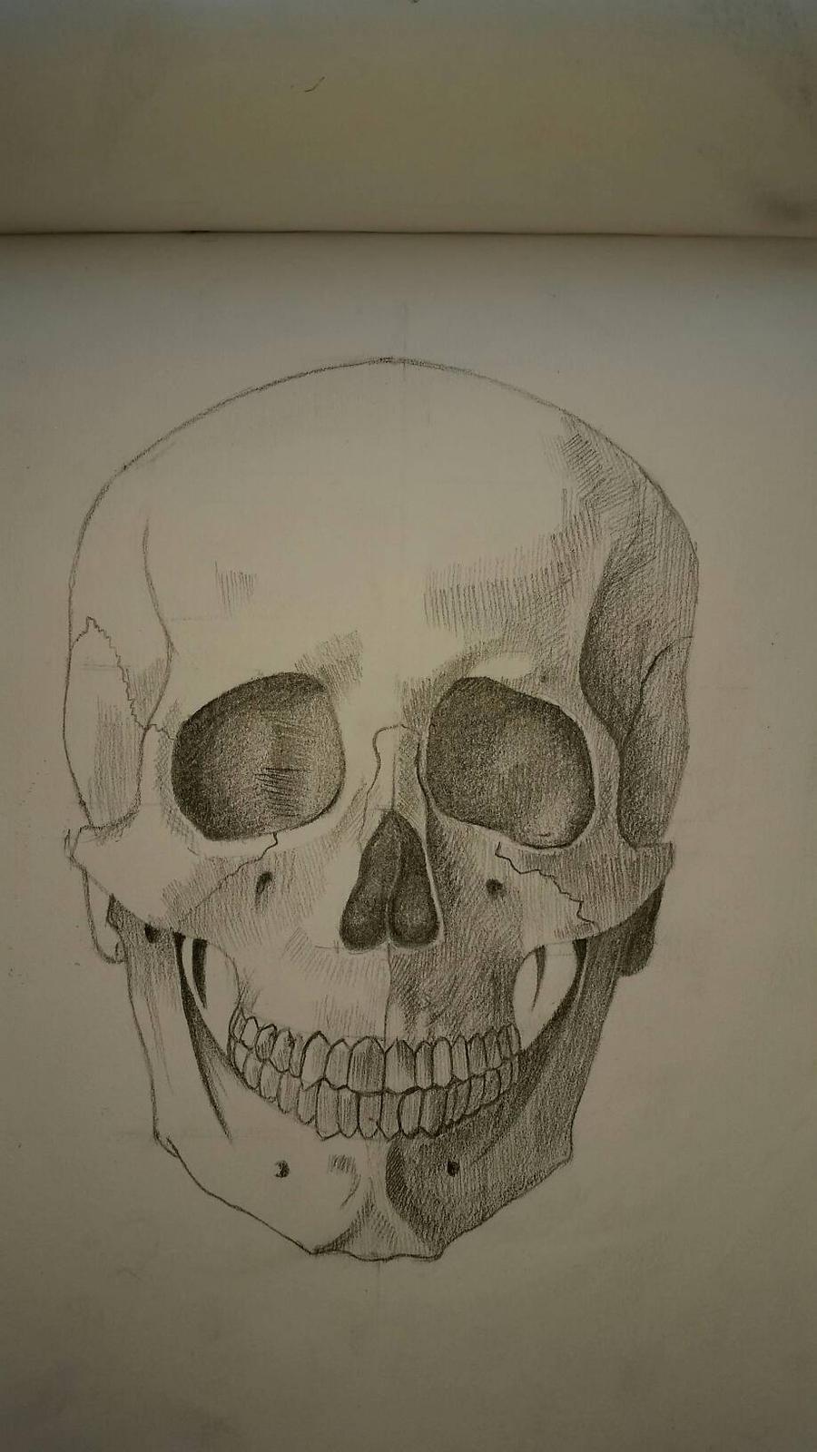 bones human head by desenez88