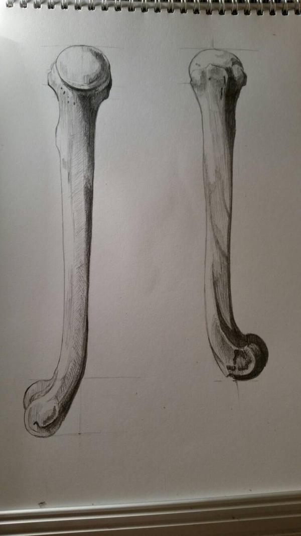 bone study 2 by desenez88