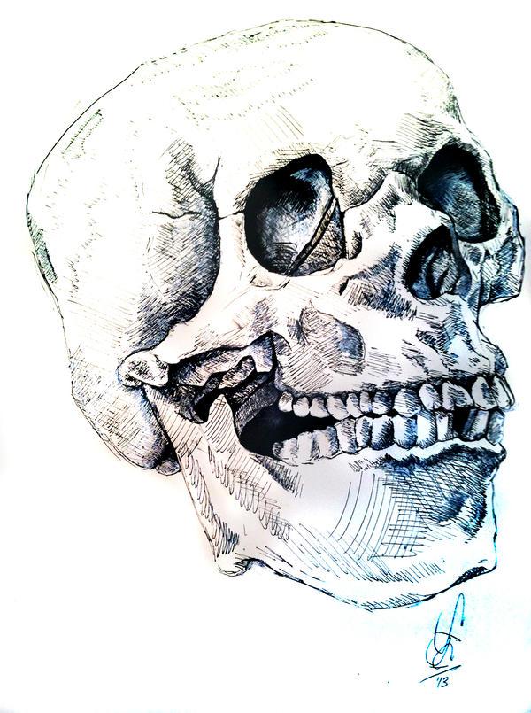 Skull Observation by PKDsm