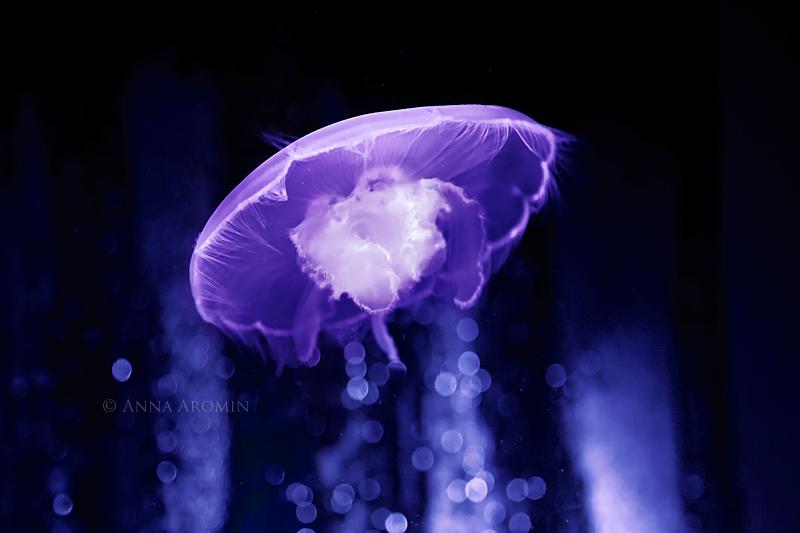 alien jelly by inktice