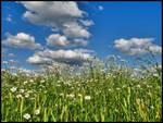 In flowering field