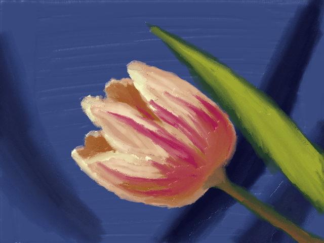 Pink Tulip by VATalbot