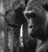 Deep Thought by whitephotographySCOT