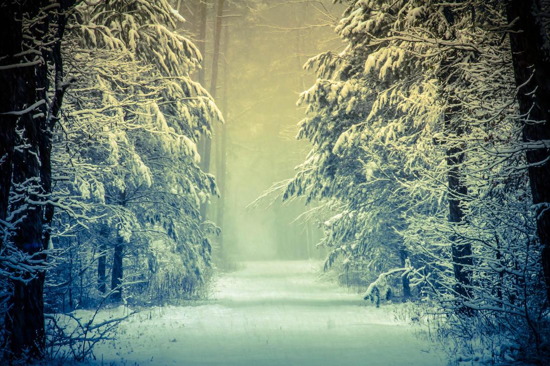 http://th02.deviantart.net/fs71/PRE/i/2013/169/e/d/winter_forest_by_virichicm-d69jsgl.jpg