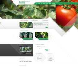 Krason - vegetable seedlings