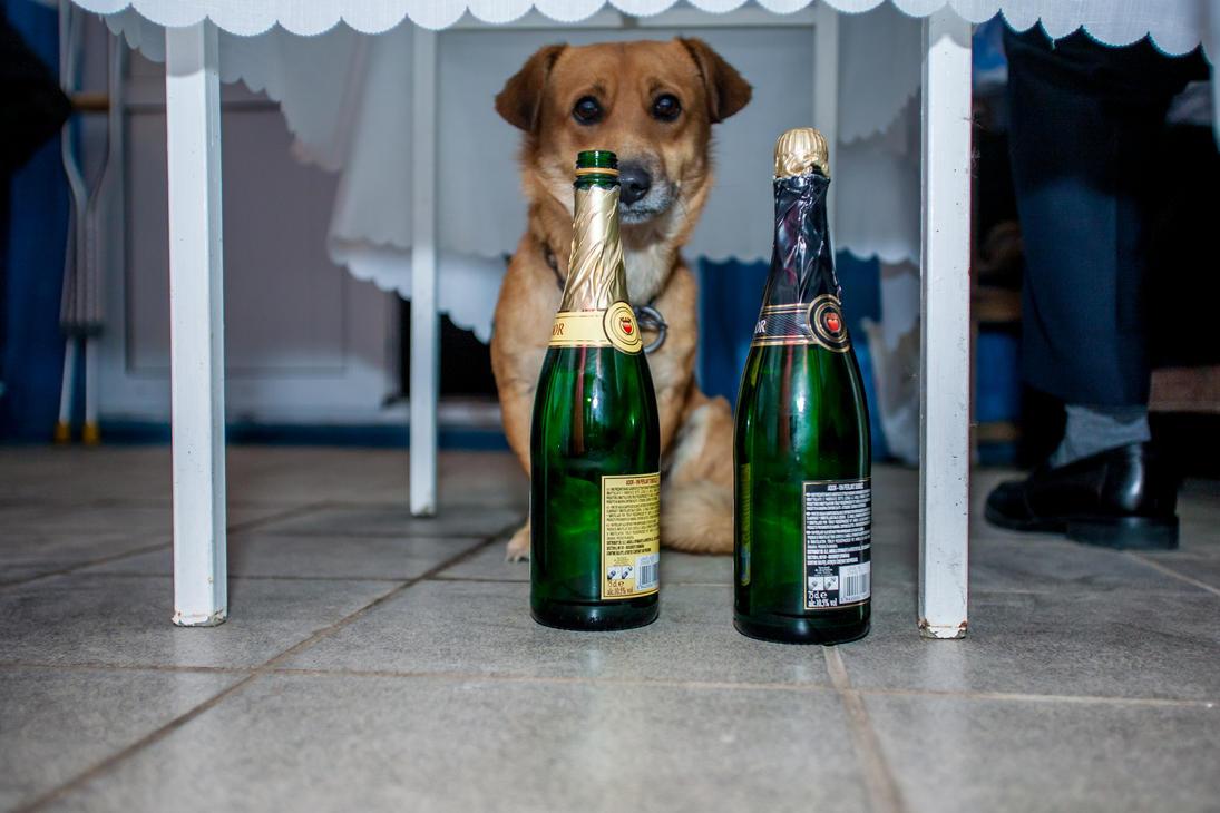 Funny Dog by SirMeliant