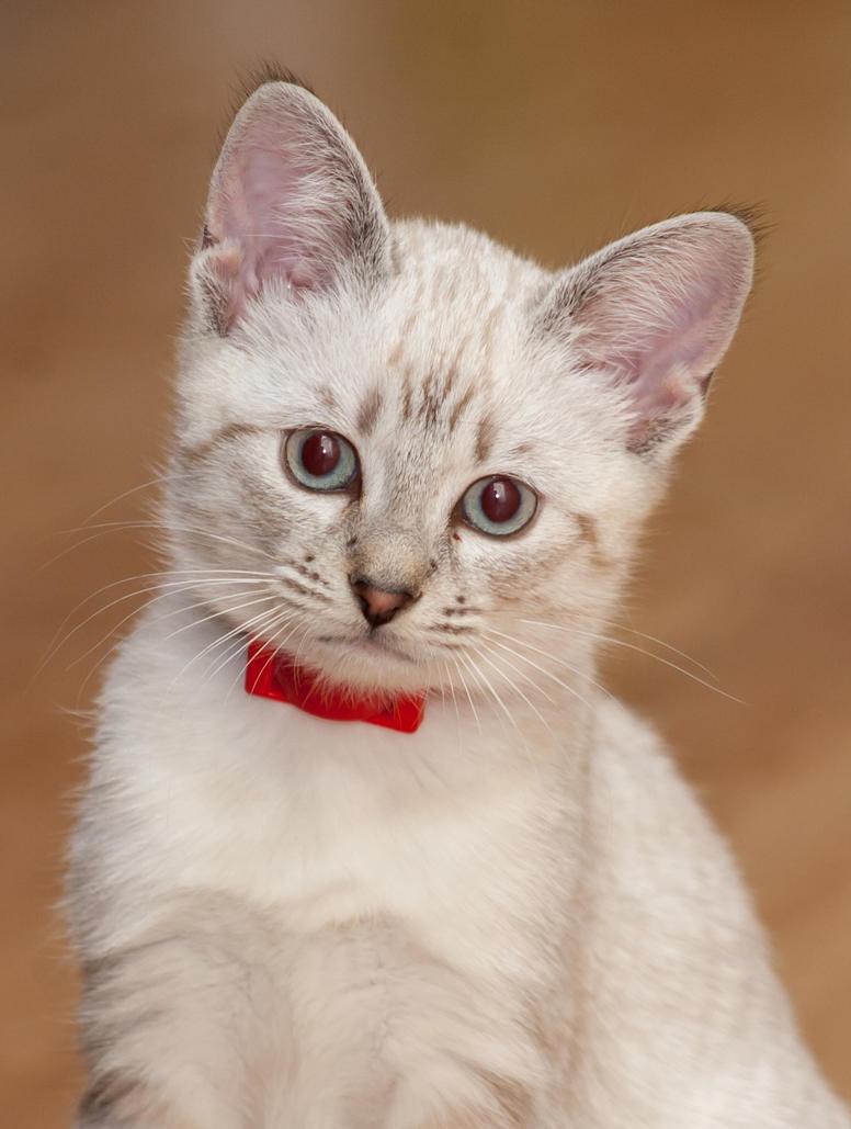 kitty by SirMeliant