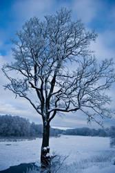 winter's dream by ziibii