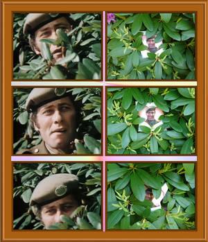 Johnny im Rhododendron