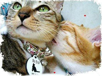 Kitty Love by Lauraest