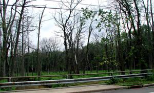 deadwood2 by ohnostock