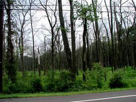 deadwood4 by ohnostock