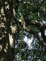 cuttree1 by ohnostock