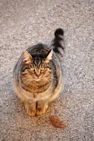 Cat by Redlynxeye