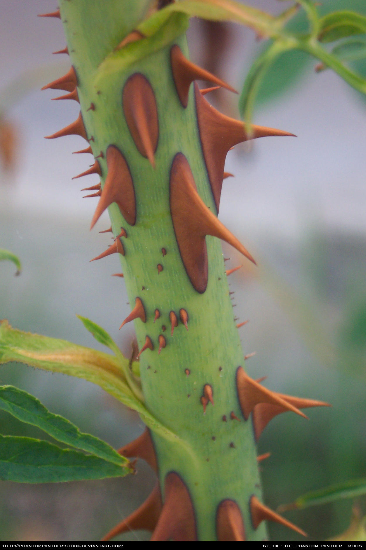 Thorns Stock 0005 by phantompanther-stock