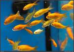 Fish Stock 0017