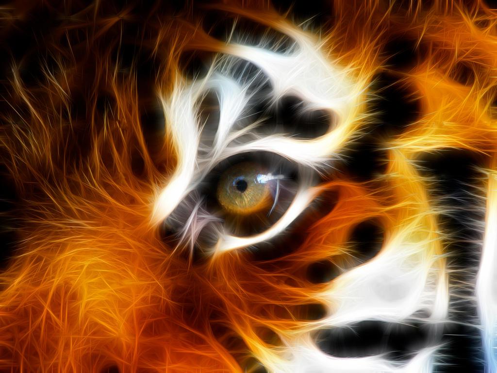 Tiger by by markashkenazi