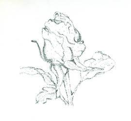 Rose by LittleDemon74