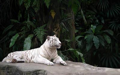 Tiger's Tree by blayrd