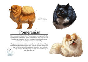 Pomeranian by ImaginaryRat