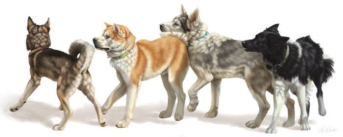 Awkward Dogs