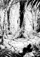 Jungle of Borneo by MiG-05