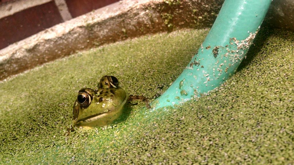 frog by loverofthestrange