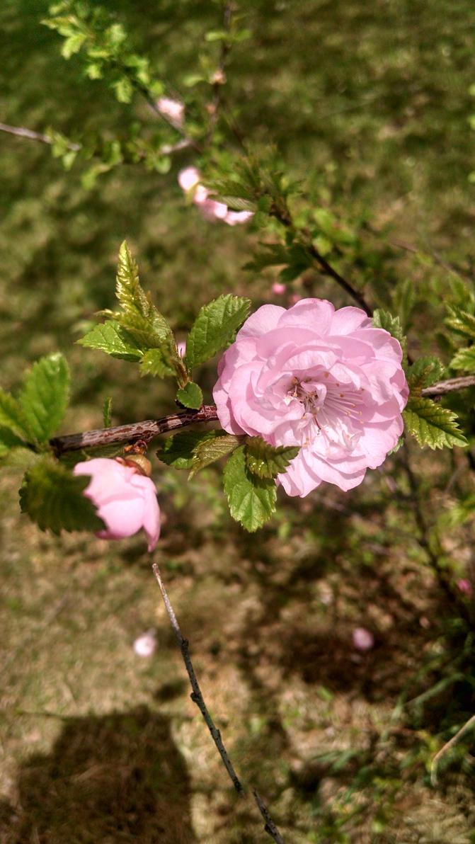 In bloom by loverofthestrange