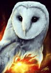 Owlverse