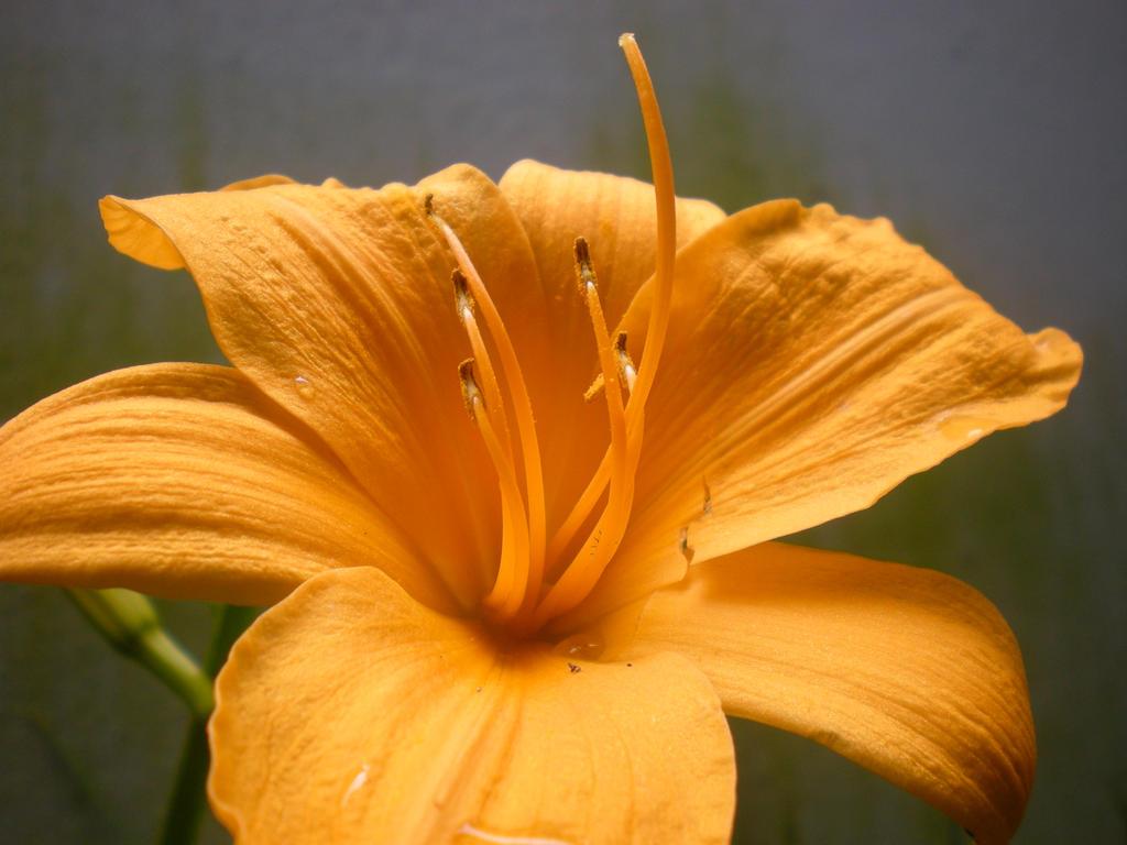 Yellow Flower 3