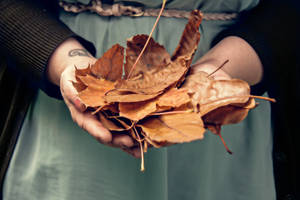 Coming Of Autumn by CanonAdventures