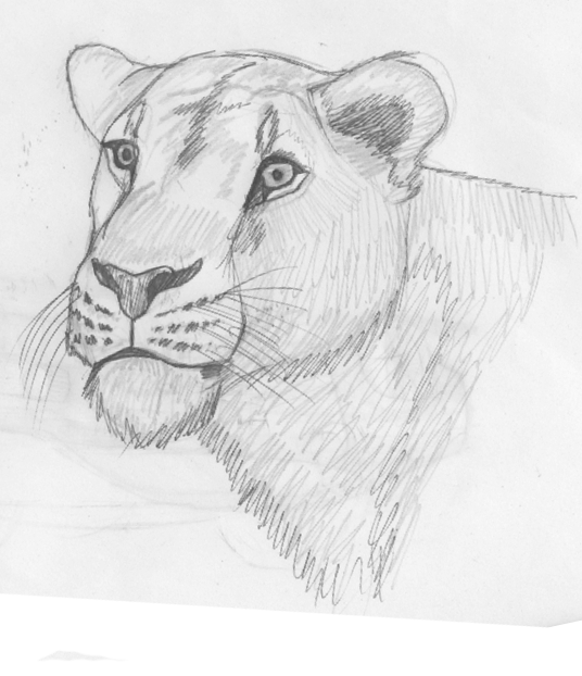 mi arte (si es que a esto se le puede llamar arte) Other_lioness_by_xtremejoe-d5gcx3j
