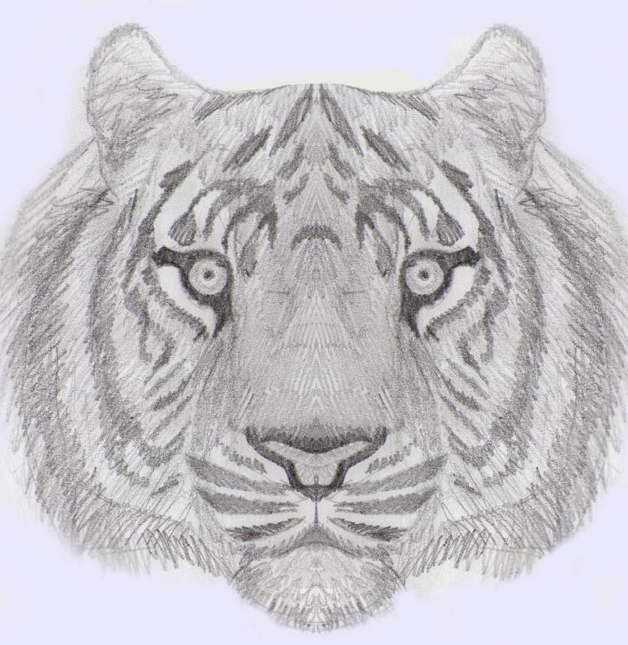 mi arte (si es que a esto se le puede llamar arte) Tiger_by_xtremejoe-d6lmd79