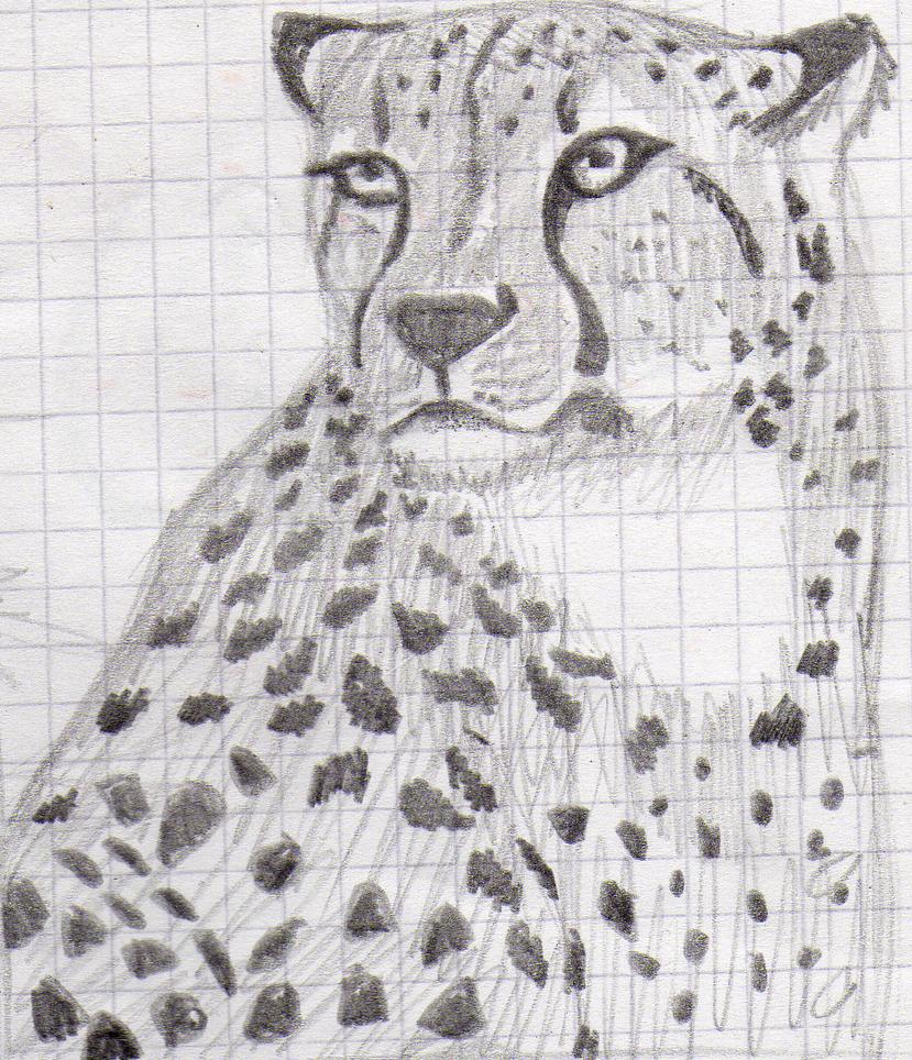 mi arte (si es que a esto se le puede llamar arte) Cheetah_practice_by_xtremejoe-d6qa75v
