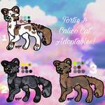 Tortie  Calico Cat Adoptables!