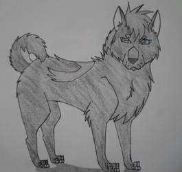 Adult Senka (Re-draw)