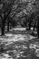 Tree-lined path by Princess-Mimi