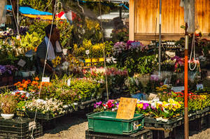 Matsuri Flower Stall by Princess-Mimi