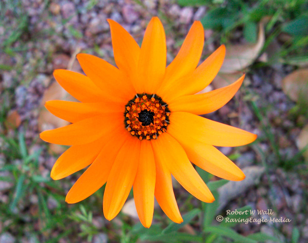 Lone Flower by RavingEagleMedia